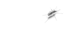 AD_HTW_Testyour_Hearing_210x280_Mosquito_EN .indd
