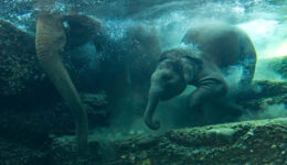 zoo_featured
